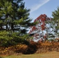 Late Fall at Brook Farm. Credit: Wilfred Holton