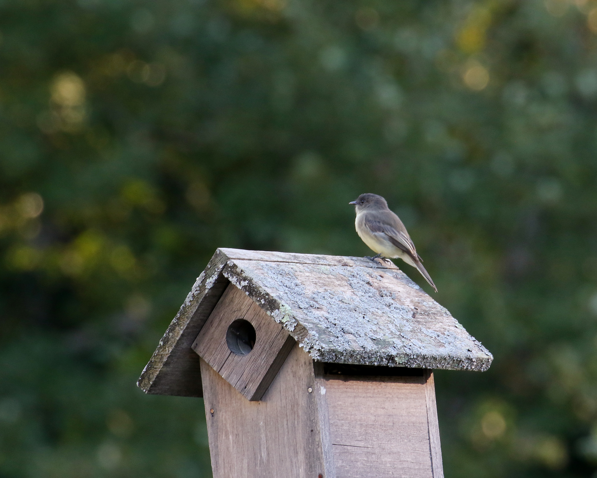 Birding at Brook Farm – Saturday, May 5, 9AM to 11AM