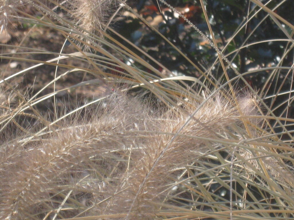 "Eileen Mcenaney ""Crystal Grasses"""