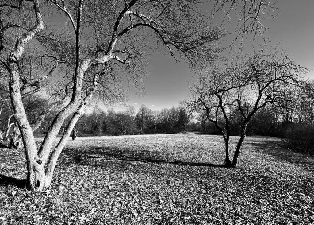"Ray Porfilio ""Winter's Light"""