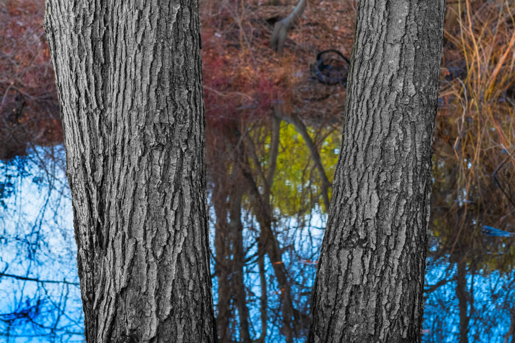 "Bruce Wilson ""Mirrored Trees"""